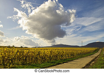 Road in wineyards - clouds over the road in wineyards,...