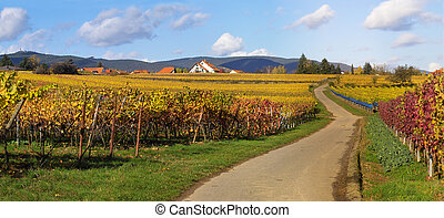 Road in wineyards - panoramic picture of the road in...