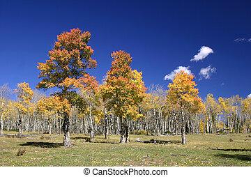 Mountain Meadow - Autumn view of mountain meadow reveals...