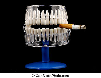 Mouth Model - Photo of a Model of a Mouth With a Cigarette