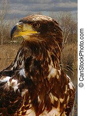 águilas,  ego