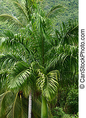 Tropical Forest 5 - Flower Forest, Barbados.