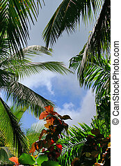 Tropical Forest 7 - Flower Forest, Barbados.