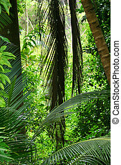 Tropical Forest 8 - Flower Forest, Barbados.