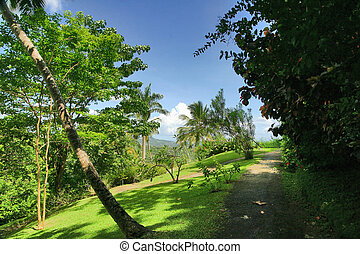 Tropical Forest 11 - Flower Forest, Barbados.
