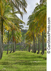 Tropical Forest 13 - Atlantic Coast, Barbados