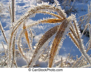 Christmas design 4 - Field plants covered by hoarfrost
