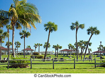 Tropical Park - Palm tree lined park in the warm Florida...