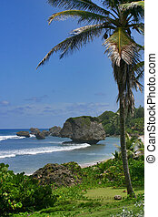 Mushroom Rocks - Soup Bowl, Bathsheba, Barbados.