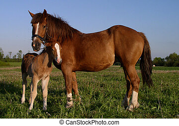 Horses - Two horses - mother and child