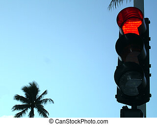 Traffic Light - A Traffic Light and a palm tree