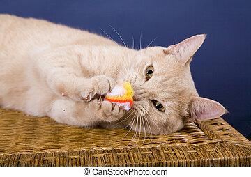 Cat - Yellow Cat