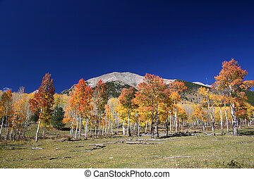 Mt Shavano - Autumn view of Mt Shavano in the Colorado Rocky...