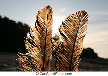 feathers against the sun 2
