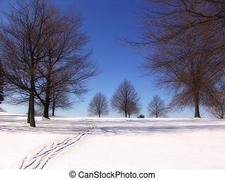 Winter Tree - winter landscape - snow trees and sky