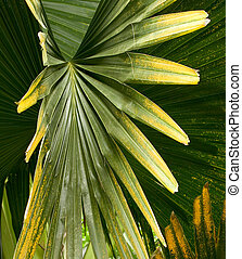 Tropical Plant, Ho\\\'omaluhia Botanical Gardens - Photo of...