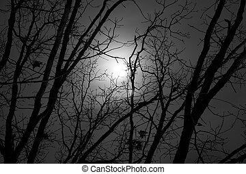 Moon Tree 2 - A view of the moon through tree branches
