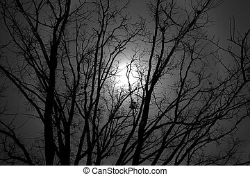 Moon Tree - A view of the moon through an old tree