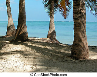 Punta Cana Palm Trees - Palm Trees at Punta Cana, Dominican...