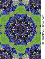 Blue winegrapes mandala - blue wine grapes mandala