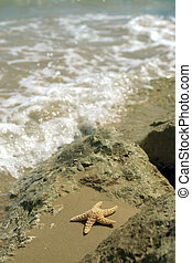 Starfish and Rocks - A starfish in a rockpool on a sandy...