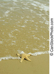 Starfish - A wave laps over a starfish on a beautiful sandy...
