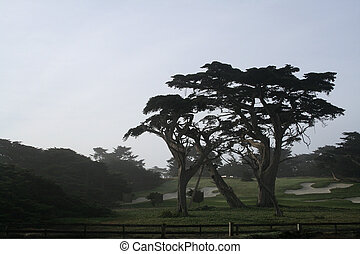 golf04 - golf course at dawn on Bebble Beach in Monterey