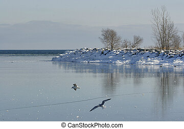Ice Time - Frozen lake, flying gulls.