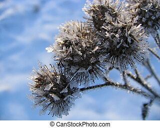 Christmas design 2 - Field plants covered by hoarfrost