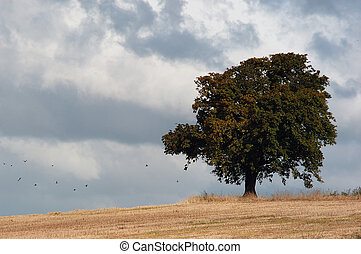 Strom Front - A single tree in a field prior to a fierce...