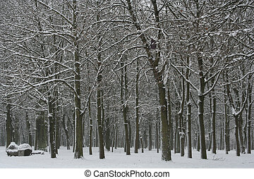 Winter Landscape - Winter in the park
