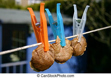 Tea bags hung out to - tea bags drying on a line