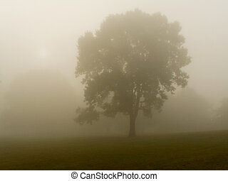 Dense Fog - This is a shot of a tree in a very dense early...