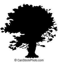 クリ, 木