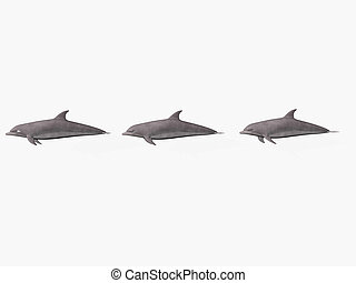 Dolphins in a row - - Isolated dolphins in a row with copy...