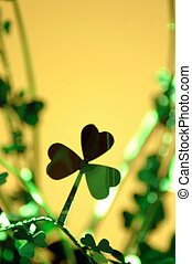 clover - three leaf clover