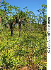 Blue and green - Corkscrew Swamp Sunctuary, trees and...