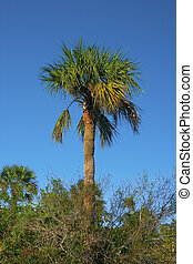 Florida Palm - palm, lovers key state park