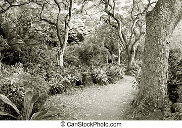 Rainforest--at the Waimea Valley Audubon Center on Oahu,...