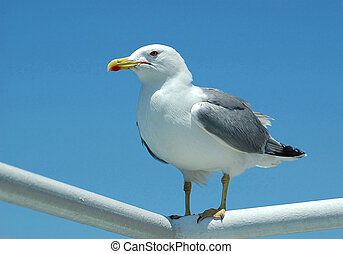 Sea gull sitting on steel tubes