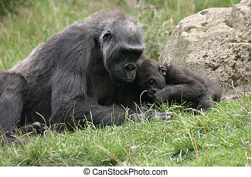 Gorillas - Gorilla mother with baby