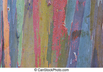Eucalyptus Bark - Photo of Eucalyptus bark t the Waimea...