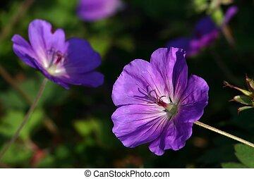 purple Flowers taken on a sunny morning