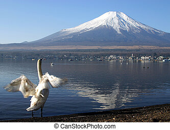 Bird enjoying View - A swan on Lake Yamanaka enjoying the...