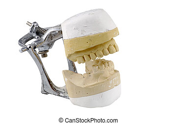 Dental Model - Isolated Dental Impressions