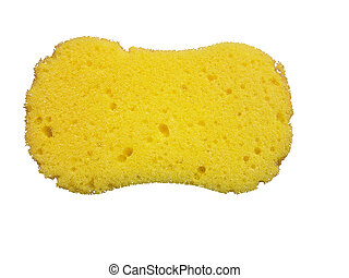 Sponge 2 - An isolated generic sponge