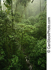 Rains in rain forest - View down from the Hanging bridges...