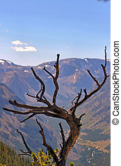 Weathered Tree - A weather tree devoid of foilage overlooks...