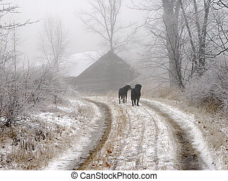 Fog dogs - Two canine friends returning home from a walk on...