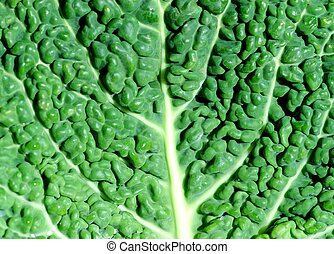 collard greens leaf texture